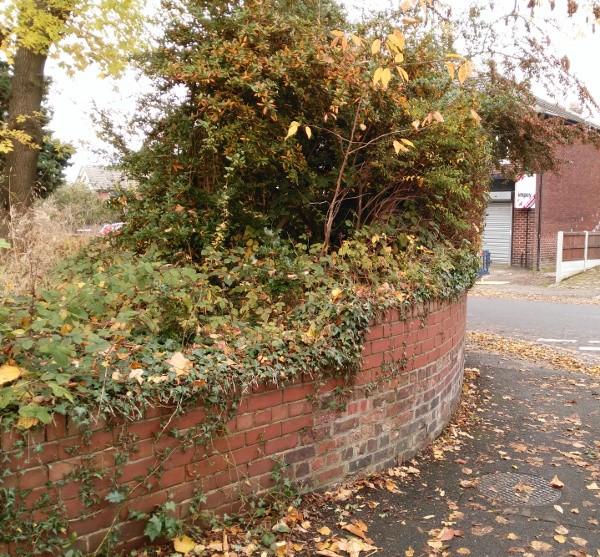 old hall road trees